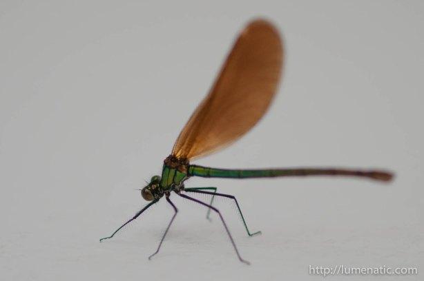 20120527dragonfly-raw-1-5