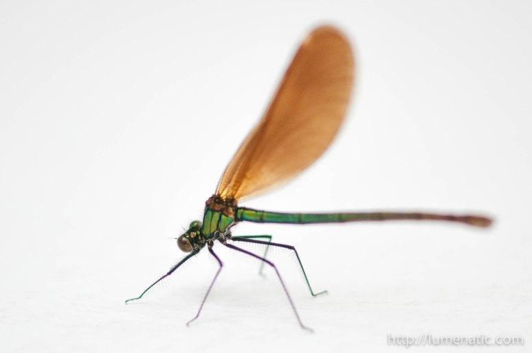 20120527dragonfly-raw-1-8