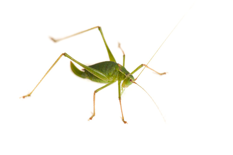 grasshopper-evolution-7