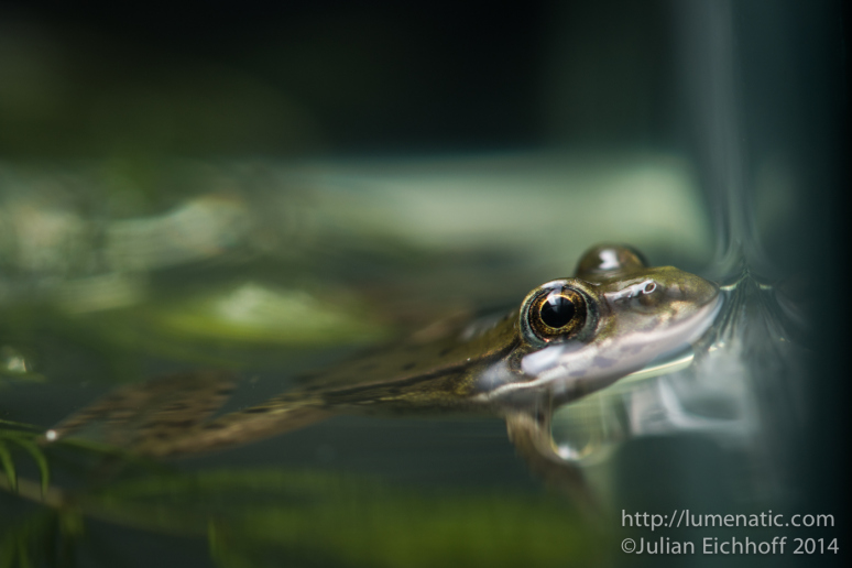 20140731-frogs-003